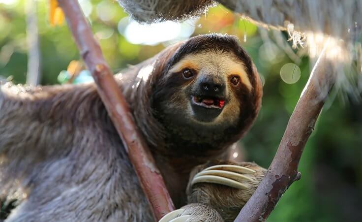 Cable & Wireless Panama Is No Sloth With Proactive Monitoring